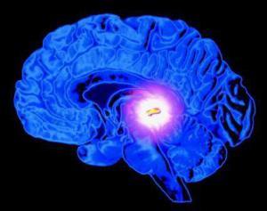 your brain on light